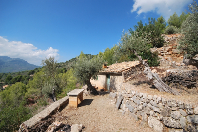 Olive groove with great views over Fornalutx