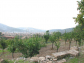 Orange grove in great location with views over Sóller and with cottage to restore
