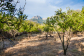 Old farm house in need of reconstruction with nice views and garden in Sóller